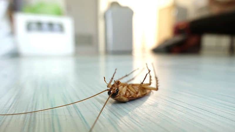 best pest control tips perth