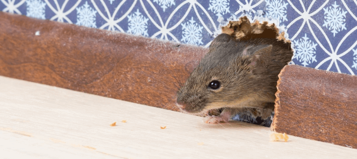 Deny Pest Access To Your Home