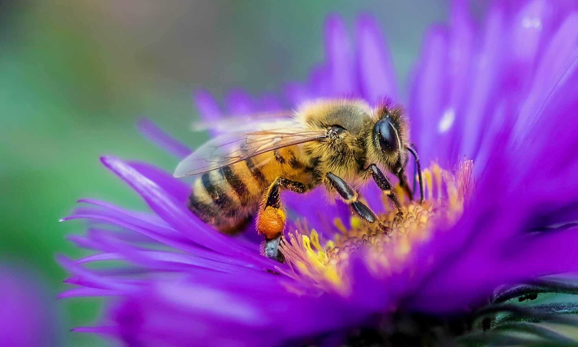 bee removal Perth Western Australia